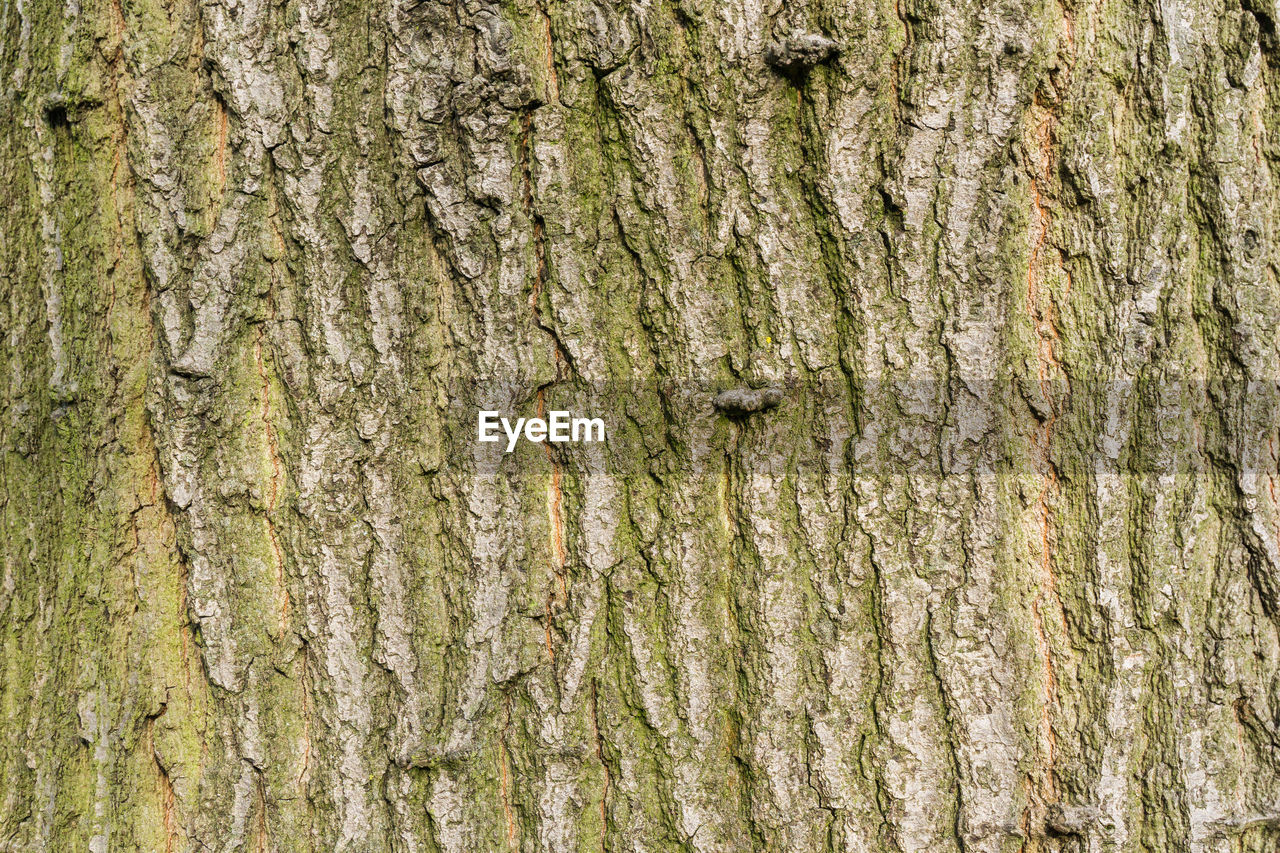textured, tree trunk, rough, tree, full frame, backgrounds, close-up, day, pattern, outdoors, bark, no people, nature