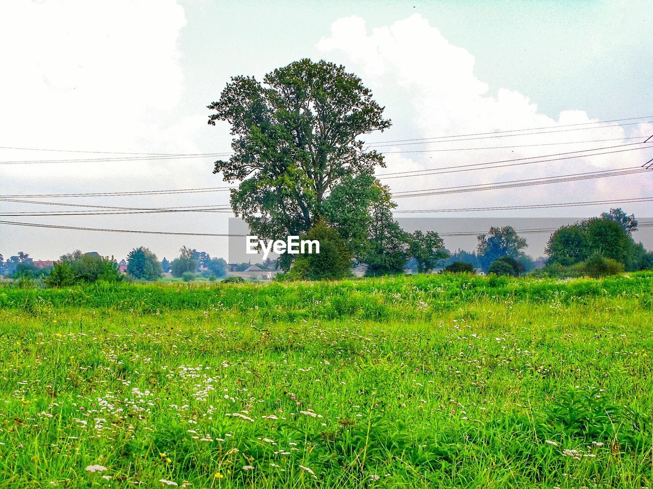 sky, plant, field, land, tree, growth, green color, nature, grass, beauty in nature, environment, cable, landscape, electricity, scenics - nature, cloud - sky, tranquility, no people, tranquil scene, power line, outdoors, power supply