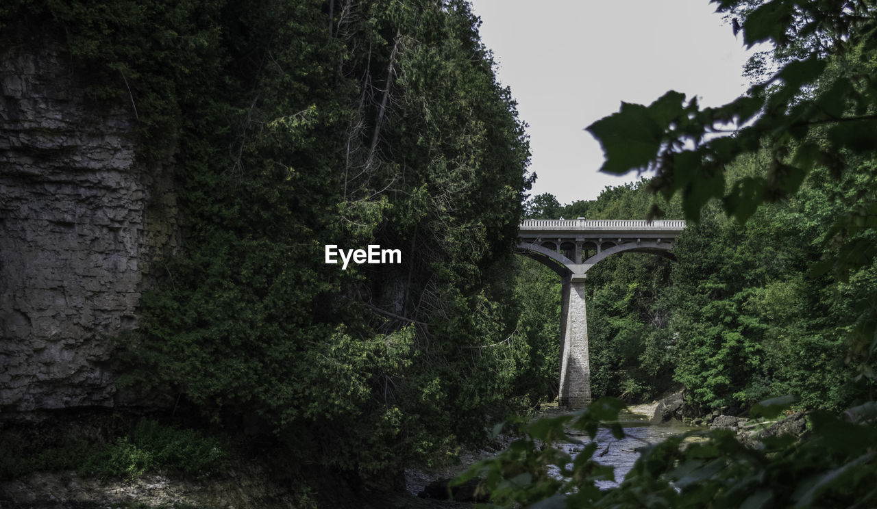 tree, plant, bridge, bridge - man made structure, connection, architecture, built structure, nature, no people, growth, water, day, forest, transportation, arch, arch bridge, river, green color, outdoors, architectural column