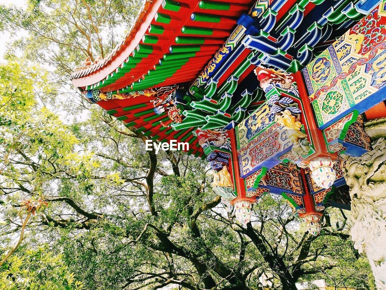 tree, low angle view, multi colored, day, no people, green color, outdoors, branch, roof, nature, architecture, beauty in nature, animal themes
