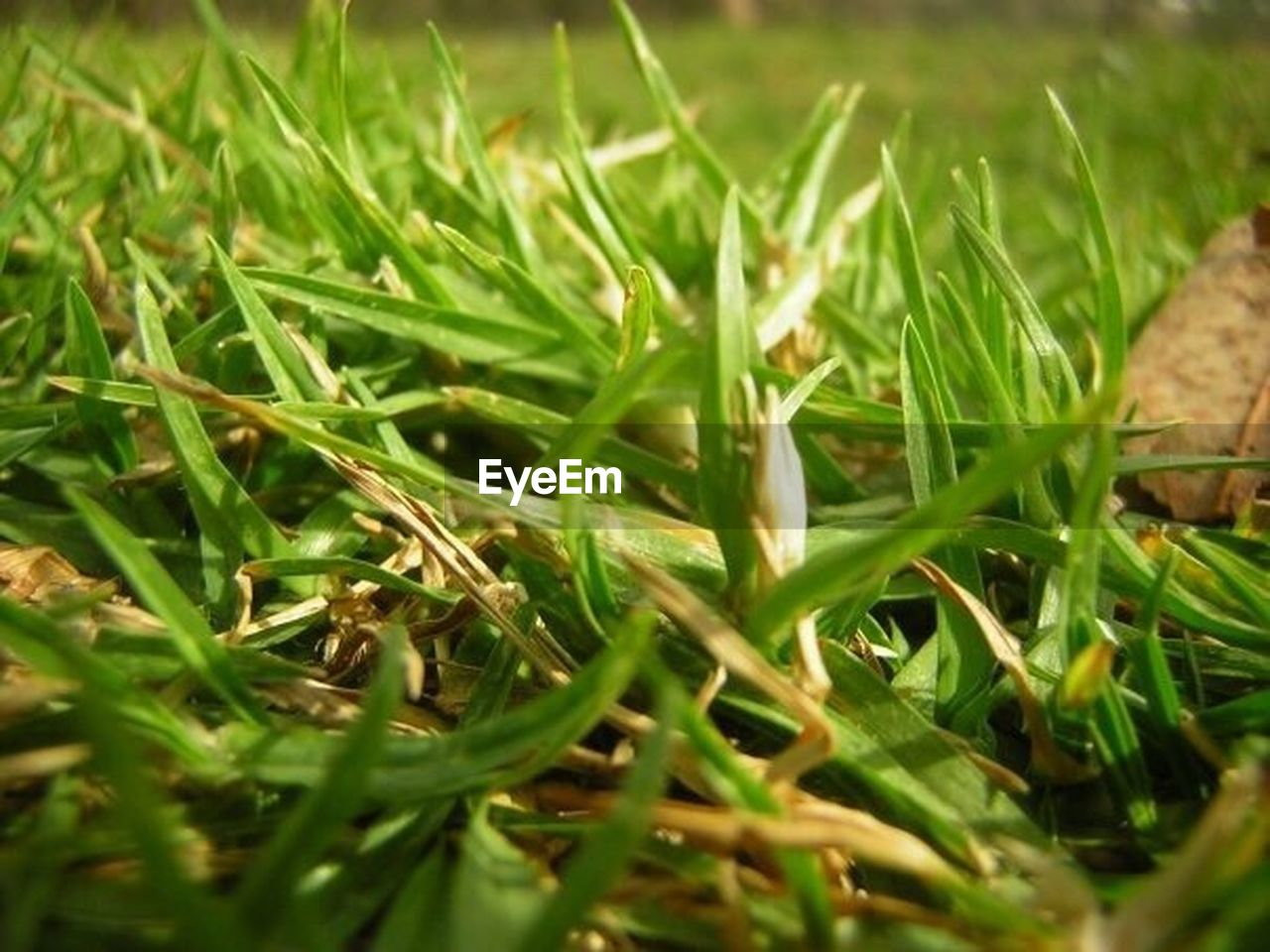 green color, grass, nature, field, growth, plant, selective focus, no people, outdoors, day, close-up, beauty in nature, freshness