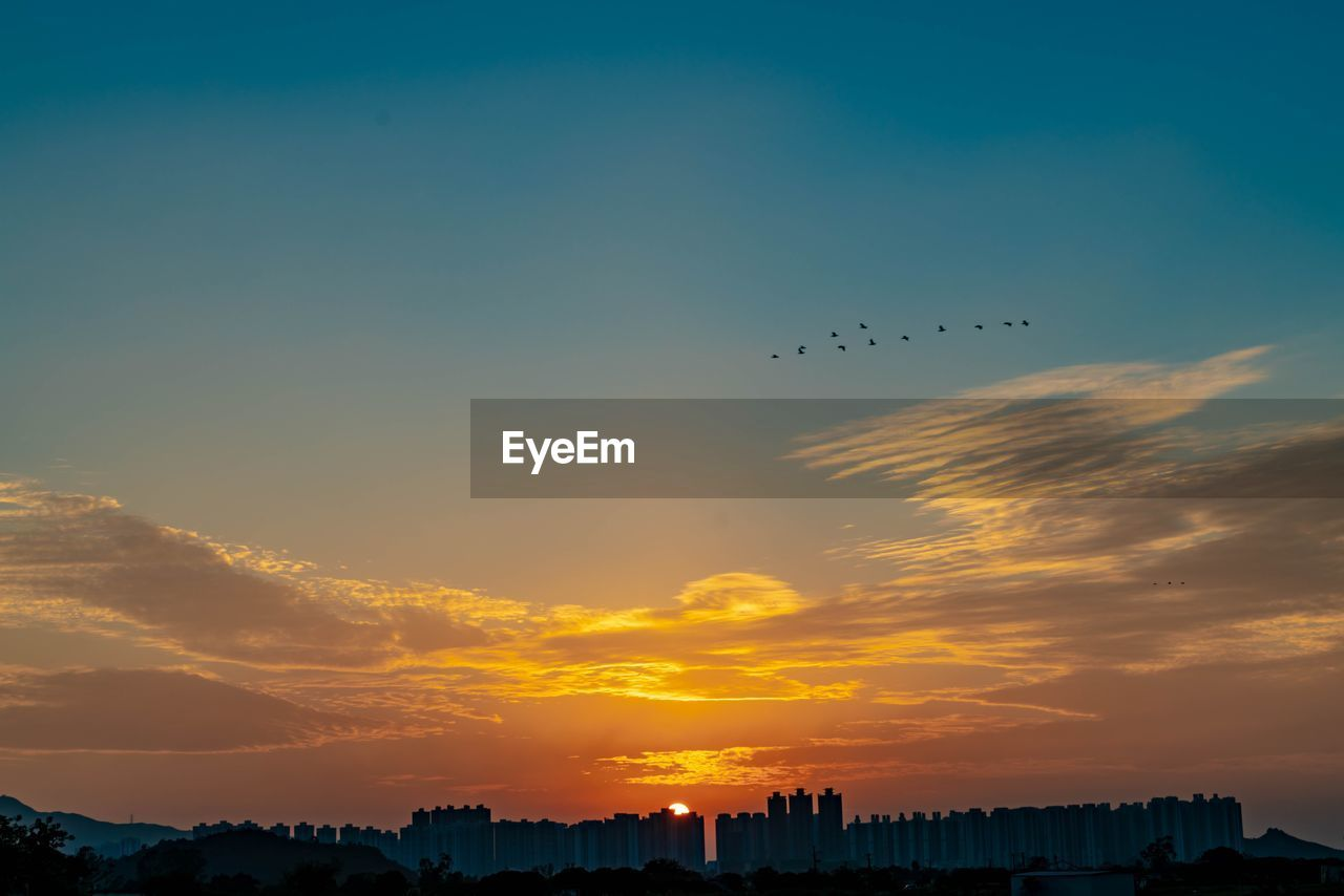 sky, sunset, animal themes, bird, vertebrate, animal, flying, animals in the wild, orange color, beauty in nature, animal wildlife, group of animals, cloud - sky, architecture, silhouette, scenics - nature, building exterior, nature, built structure, large group of animals, no people, outdoors, flock of birds
