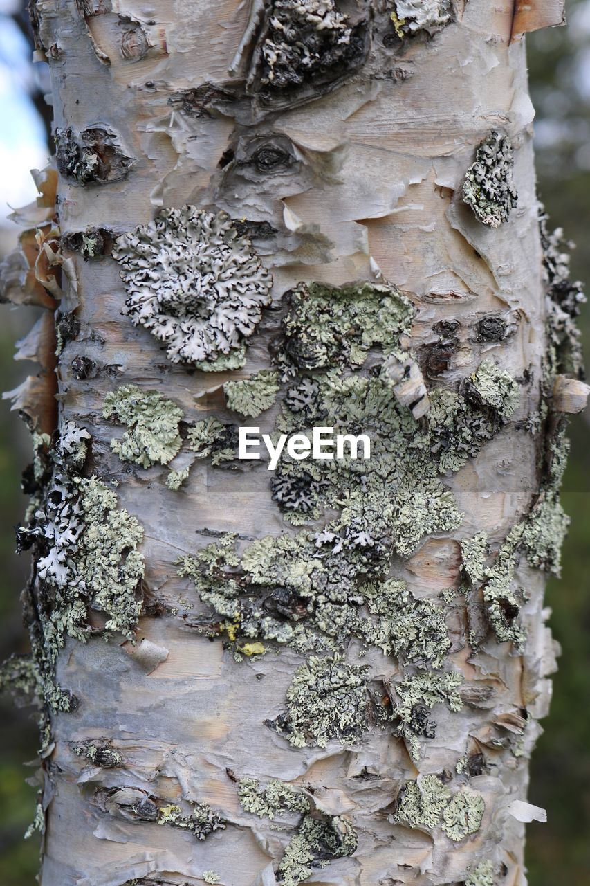 tree trunk, trunk, plant, day, tree, close-up, growth, no people, nature, focus on foreground, outdoors, lichen, textured, beauty in nature, moss, plant bark, rough, fungus, pattern, weathered, bark