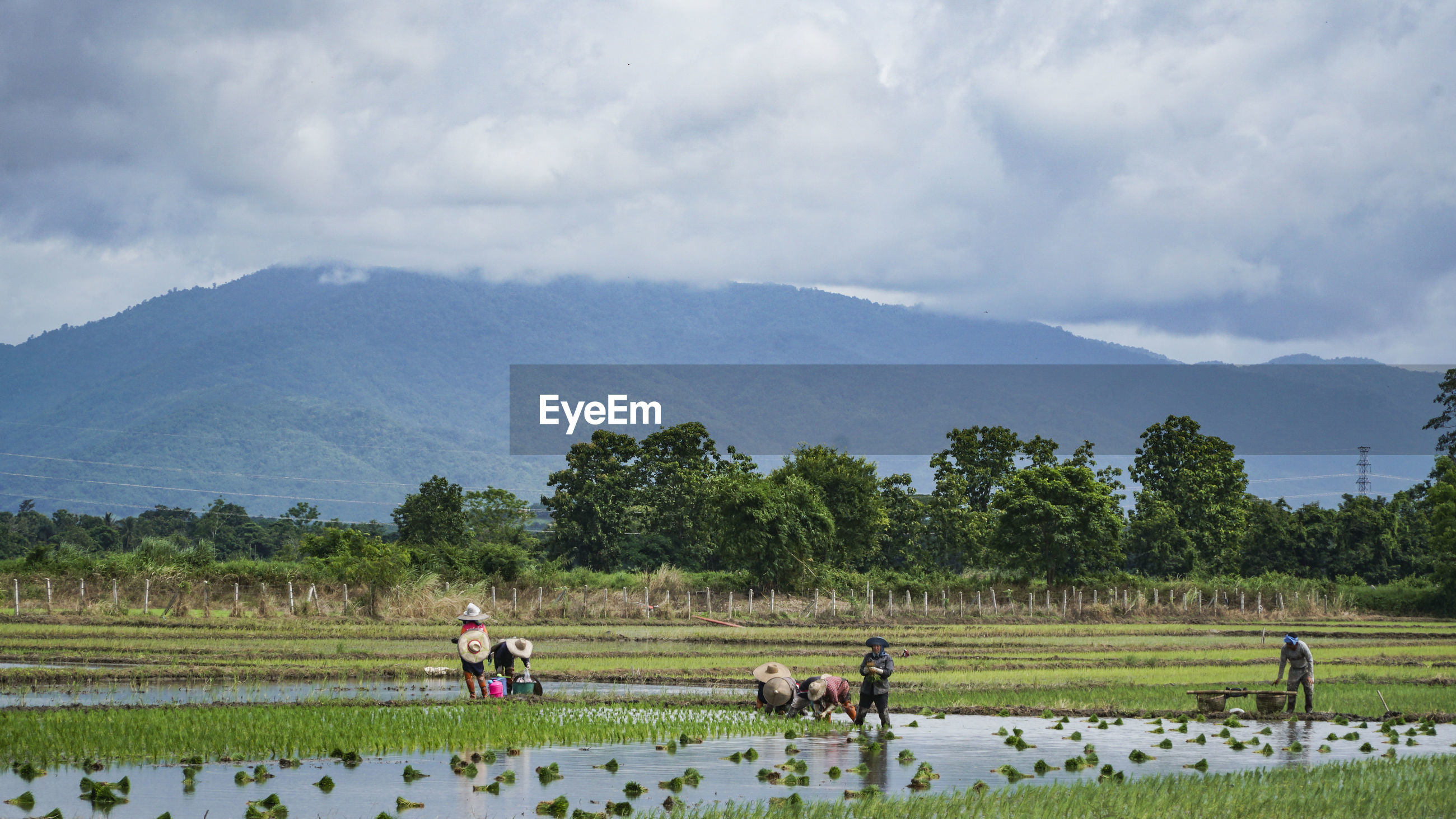 Farmers working of agricultural field against sky