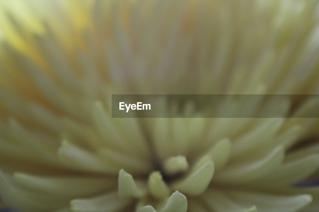 flower, petal, flower head, beauty in nature, fragility, freshness, nature, growth, selective focus, close-up, pollen, backgrounds, blooming, plant, no people, stamen, full frame, springtime, day, outdoors, passion flower