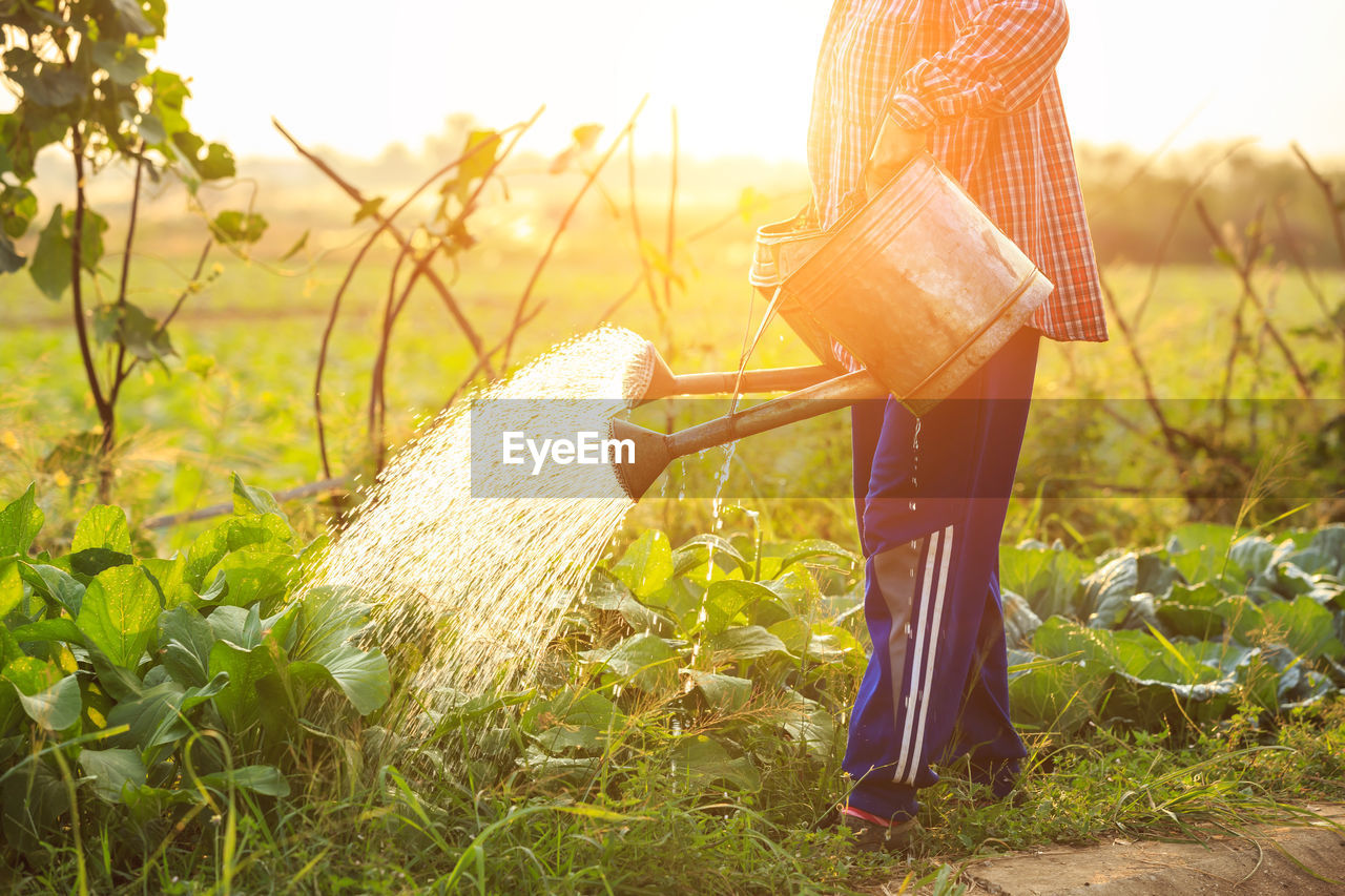 plant, land, nature, field, agriculture, growth, farm, sunlight, day, rural scene, grass, sky, crop, focus on foreground, cereal plant, outdoors, landscape, real people, beauty in nature, women, farmer