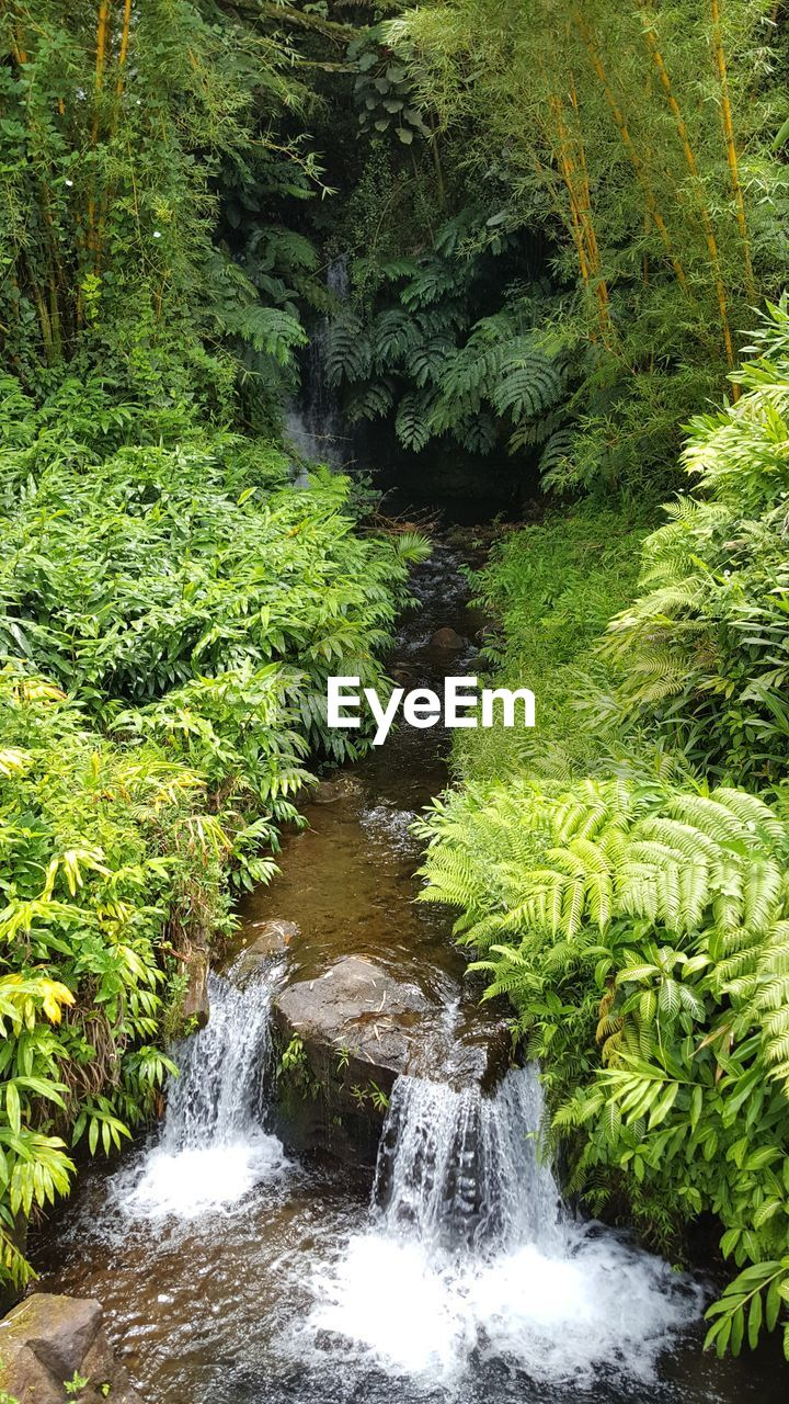 water, plant, forest, beauty in nature, tree, scenics - nature, green color, growth, motion, nature, flowing water, land, no people, waterfall, flowing, long exposure, tranquility, day, foliage, outdoors, rainforest, stream - flowing water, power in nature, falling water