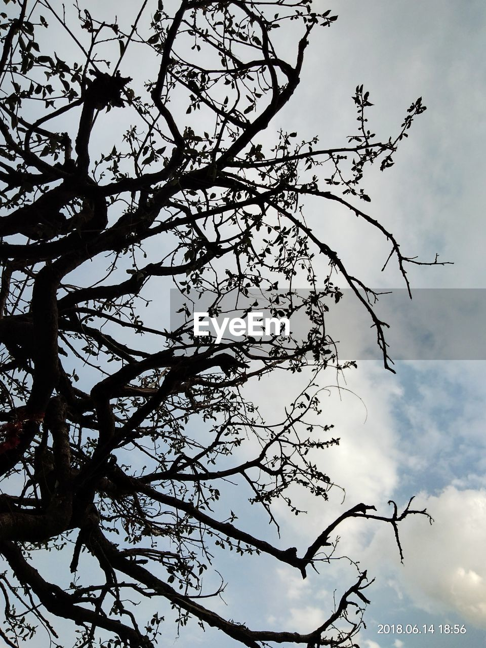 tree, sky, low angle view, plant, branch, cloud - sky, nature, beauty in nature, no people, growth, silhouette, day, outdoors, tranquility, flower, flowering plant, bare tree, springtime, blossom
