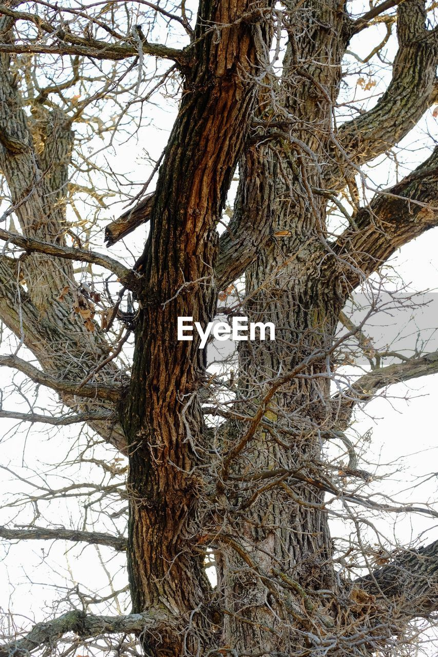 tree, branch, tree trunk, day, nature, no people, low angle view, outdoors, bare tree, complexity, beauty in nature, sky