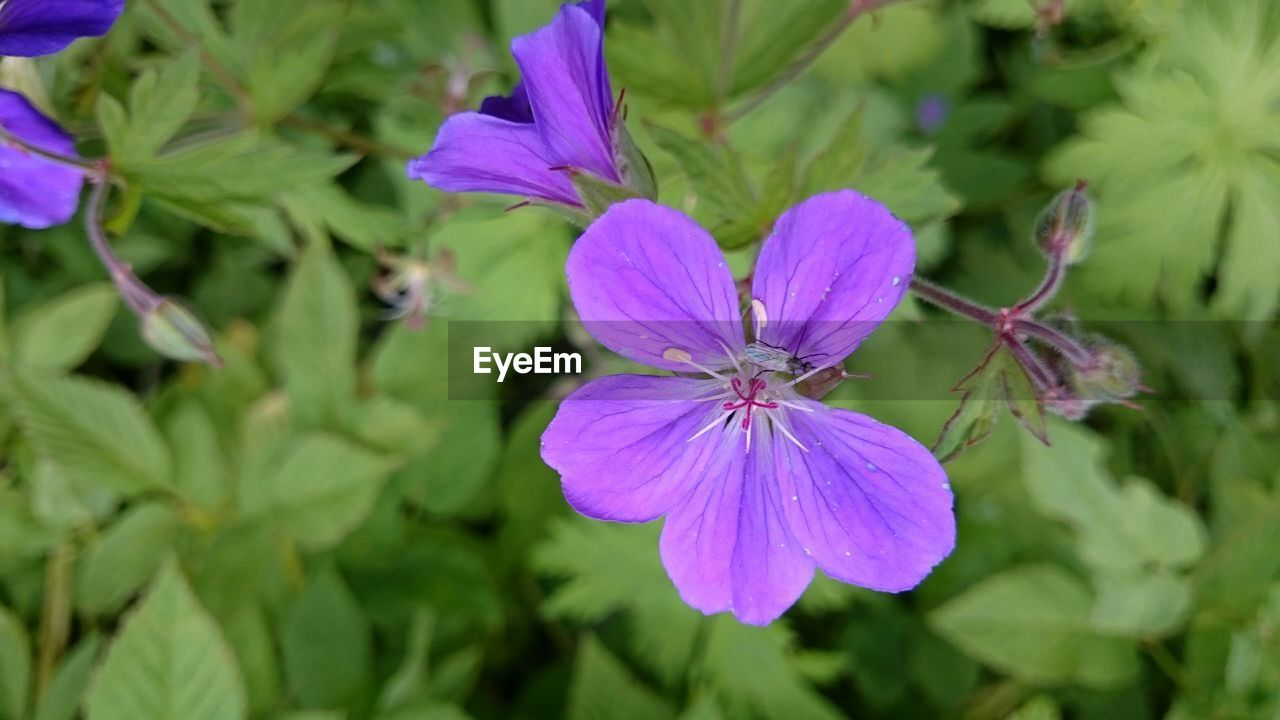 flower, petal, nature, fragility, growth, purple, beauty in nature, flower head, freshness, day, no people, plant, outdoors, green color, blooming, close-up