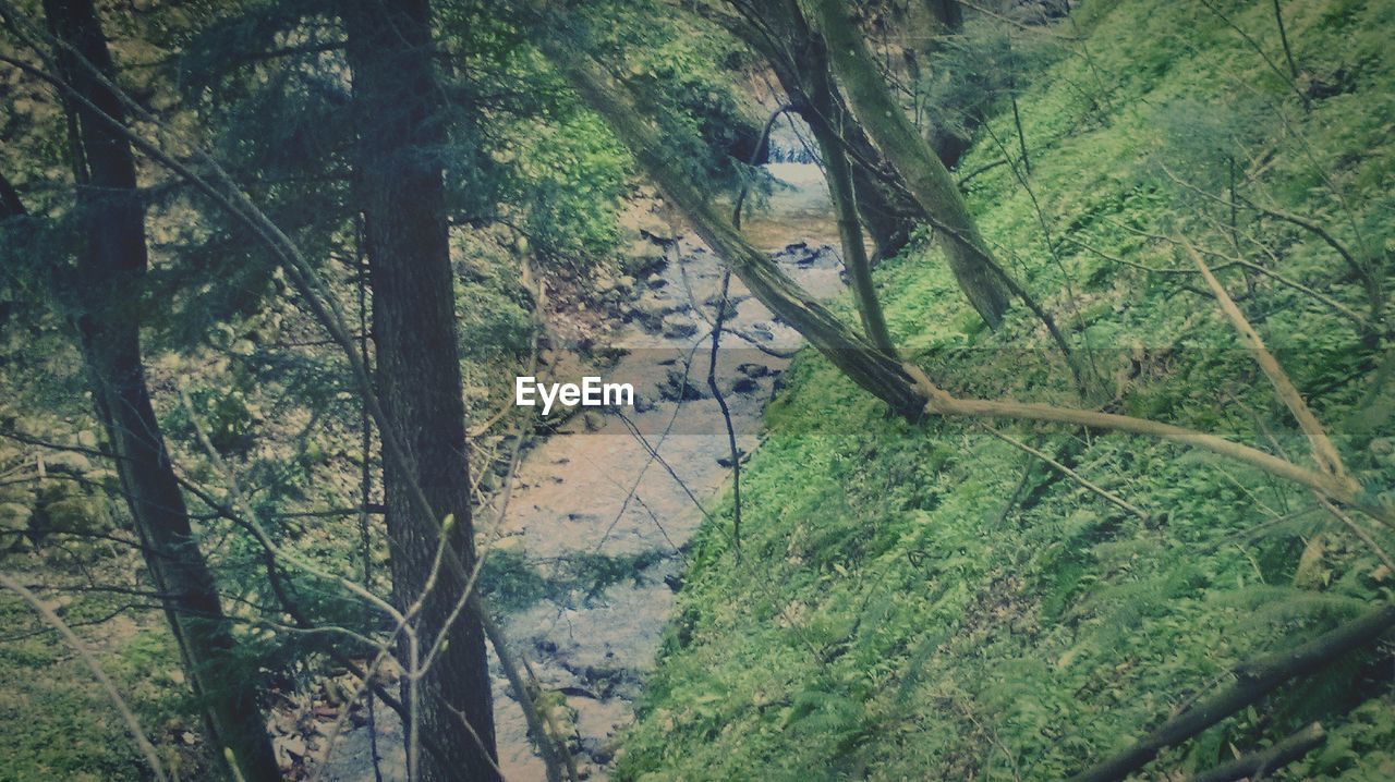 High angle view of stream at forest