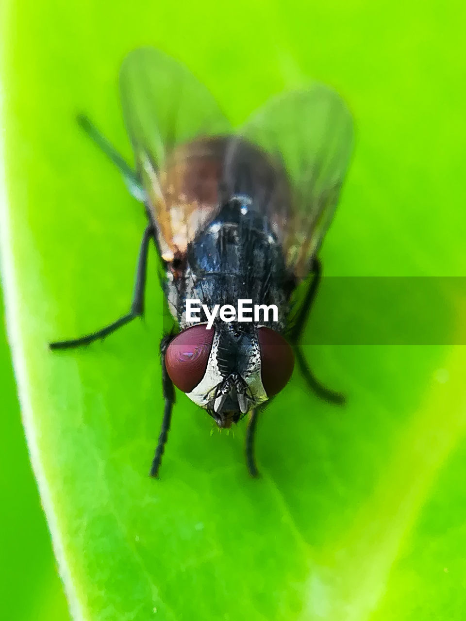invertebrate, insect, animal wildlife, one animal, animal themes, animals in the wild, animal, green color, close-up, plant part, leaf, no people, nature, animal body part, zoology, fly, plant, selective focus, animal wing, day, outdoors, animal eye, animal leg