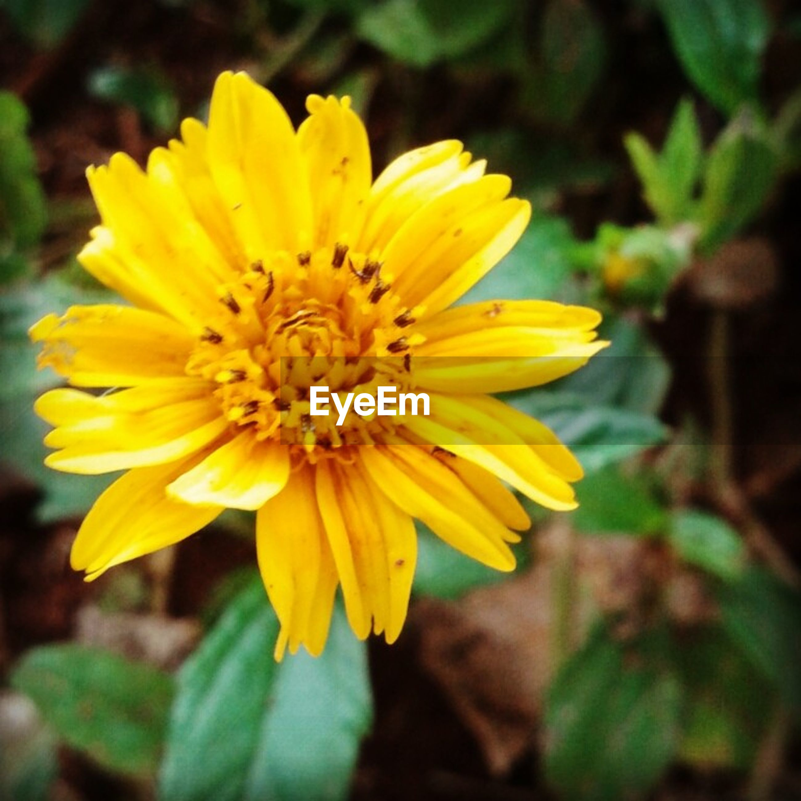flower, petal, yellow, freshness, flower head, fragility, growth, focus on foreground, close-up, beauty in nature, blooming, pollen, nature, plant, single flower, in bloom, park - man made space, outdoors, day, no people