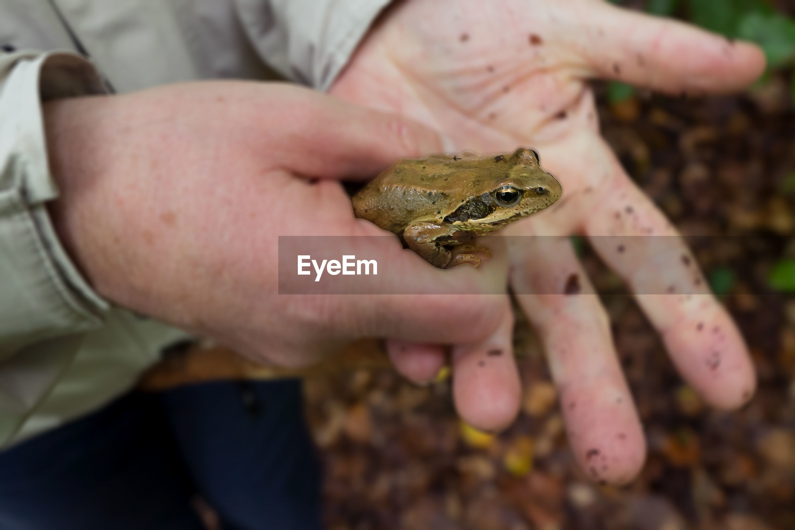 CLOSE-UP OF FROG ON HUMAN HAND HOLDING LEAF