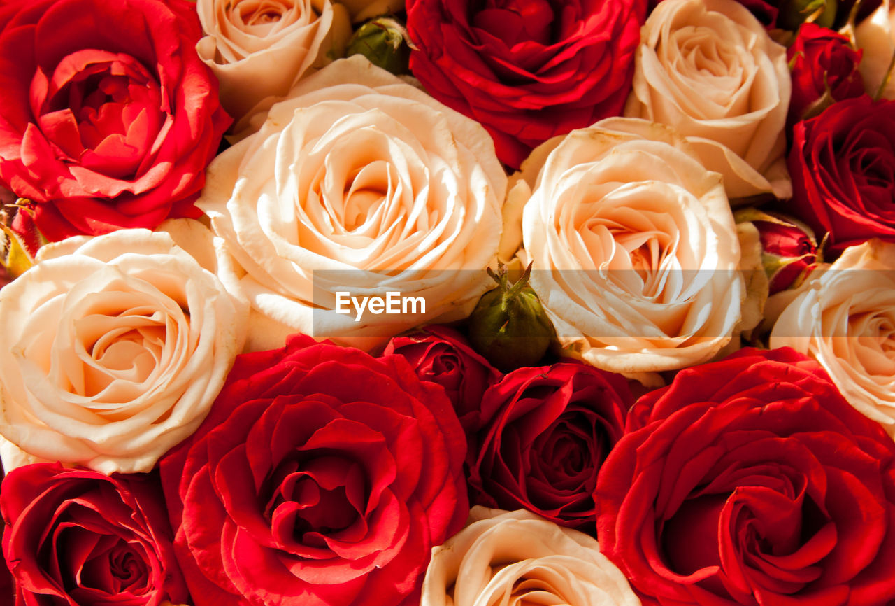 freshness, flower head, full frame, plant, close-up, inflorescence, flower, rose, petal, beauty in nature, rose - flower, no people, red, flowering plant, fragility, bouquet, flower arrangement, vulnerability, backgrounds, high angle view, bunch of flowers, softness