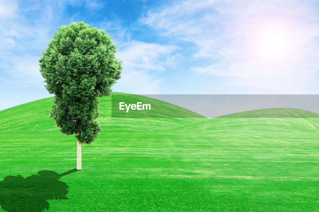 green color, sky, plant, grass, cloud - sky, nature, tranquil scene, beauty in nature, tree, environment, growth, day, landscape, no people, scenics - nature, land, tranquility, field, outdoors, sunlight