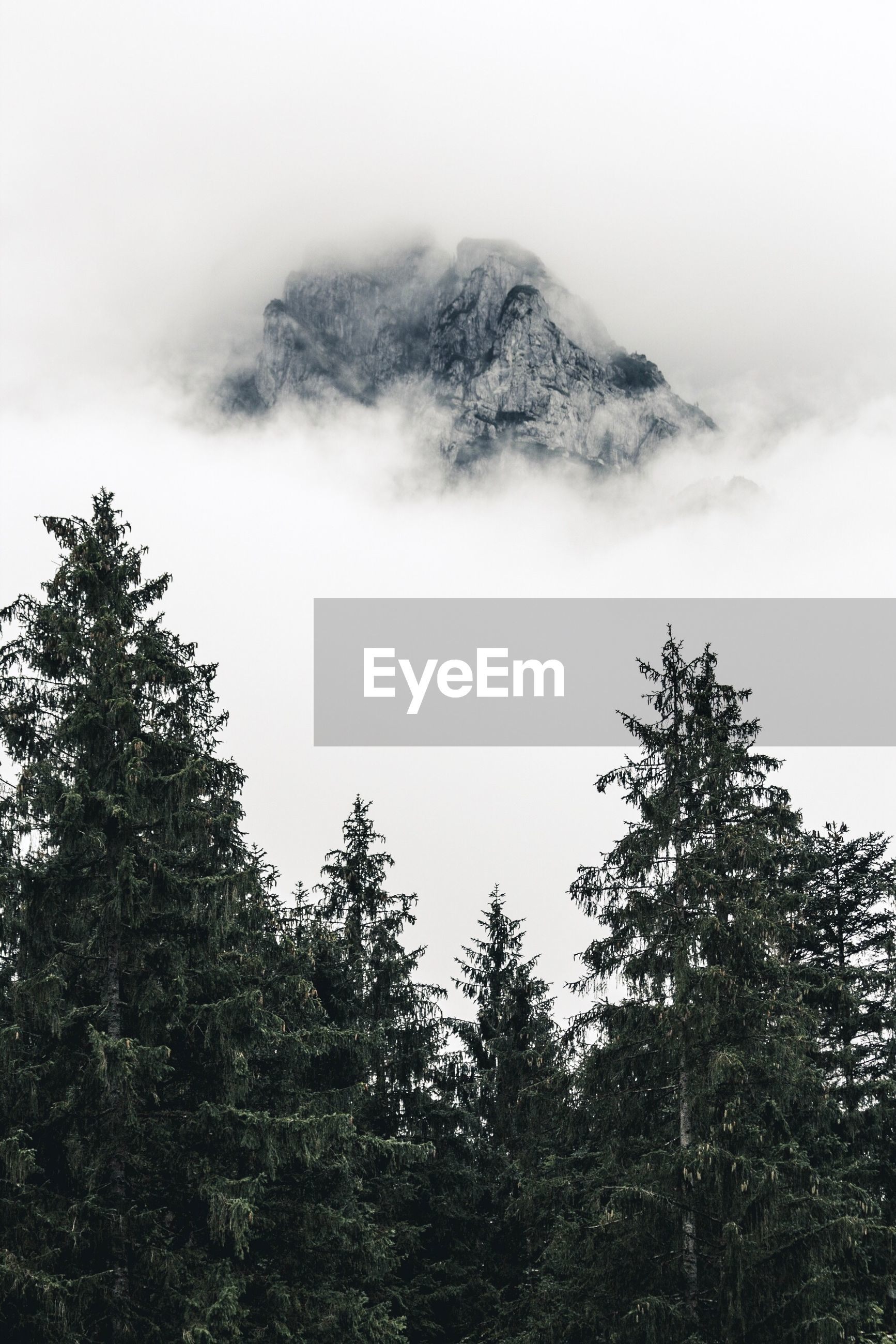 LOW ANGLE VIEW OF TREES ON MOUNTAIN AGAINST SKY