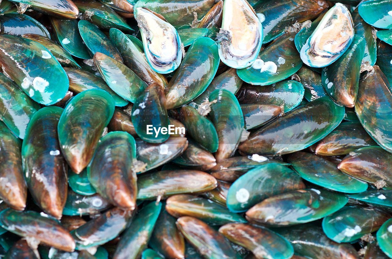 full frame, backgrounds, seafood, abundance, large group of objects, no people, close-up, animal, shell, day, animal wildlife, food and drink, high angle view, nature, freshness, animal shell, raw food, food, fish, mussel, turquoise colored, marine