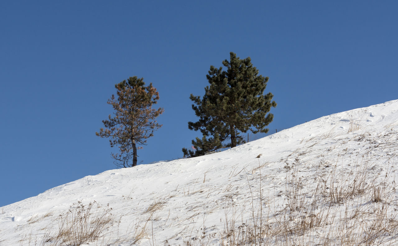 low angle view, clear sky, nature, blue, tranquility, day, tree, no people, beauty in nature, mountain, tranquil scene, outdoors, winter, snow, scenics, sky