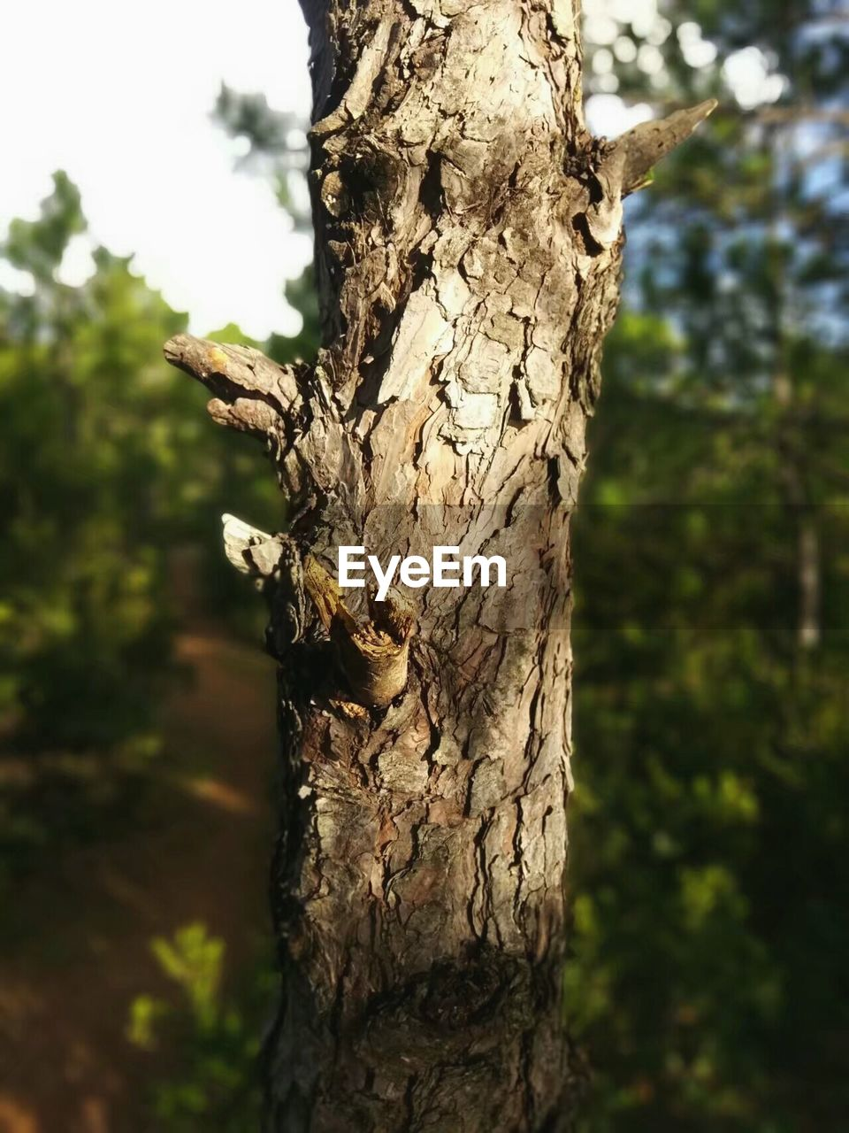 tree trunk, tree, focus on foreground, day, no people, nature, rough, close-up, tree stump, outdoors, bark, textured, wood - material, growth, dead tree