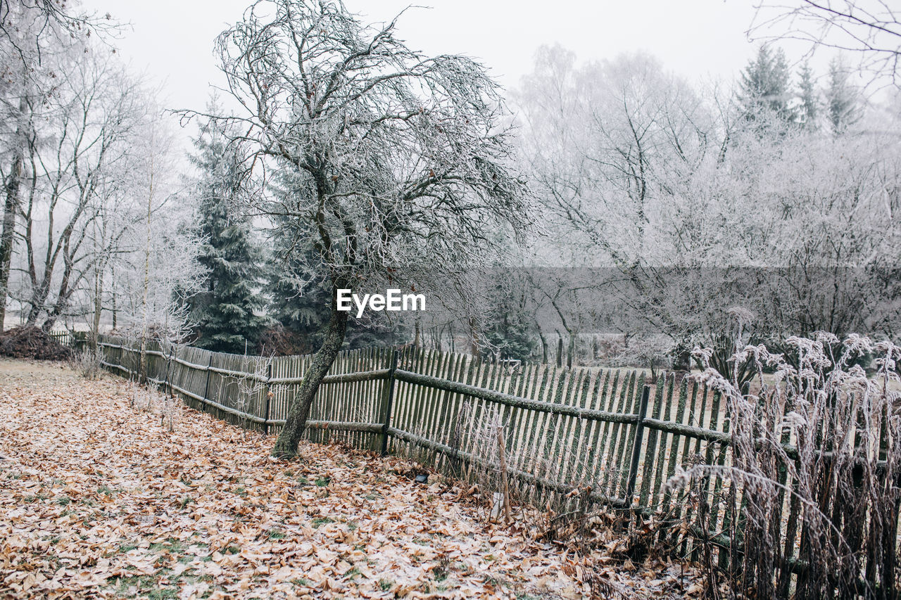 BARE TREES BY PLANTS DURING WINTER