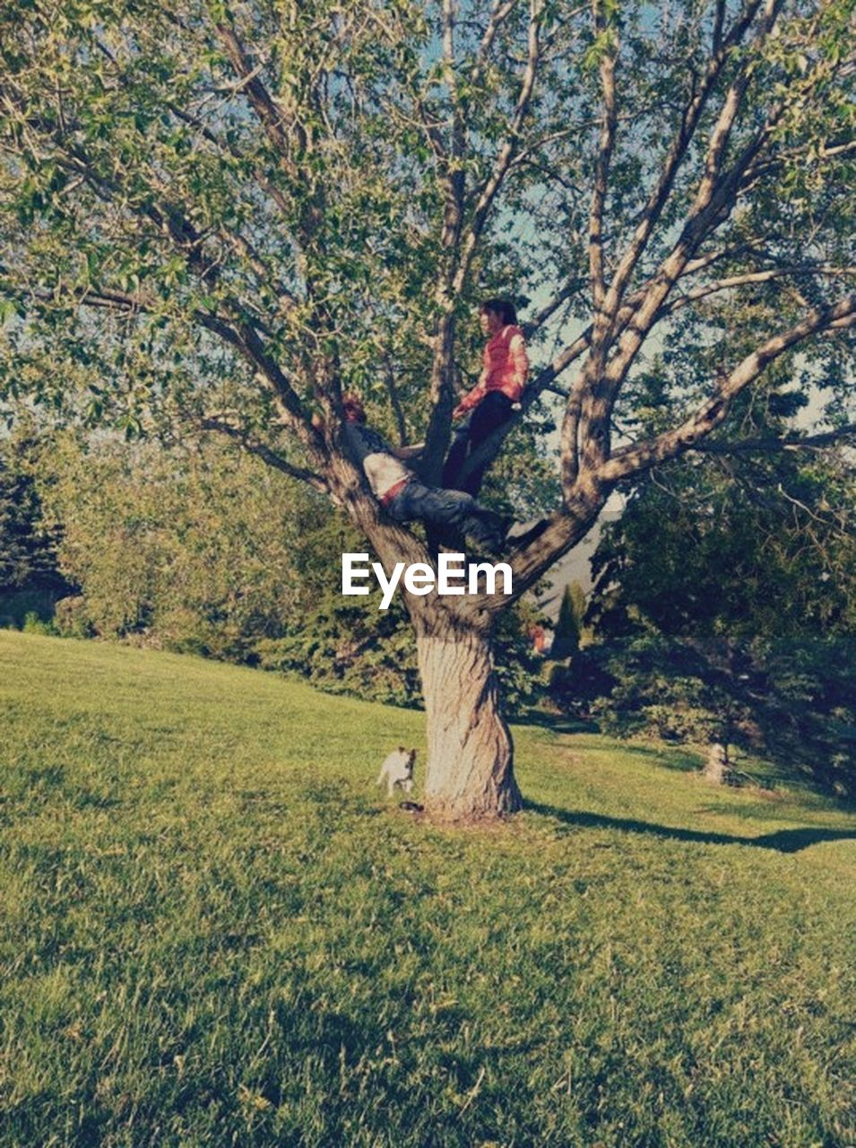 tree, one person, tree trunk, nature, full length, day, grass, outdoors, adults only, one woman only, branch, only women, adult, people, young adult
