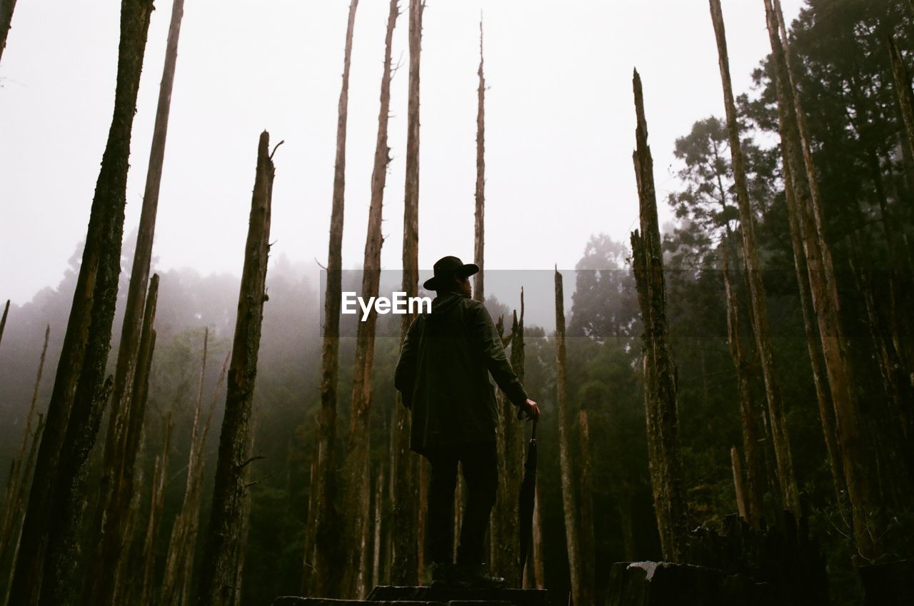 Low Angle View Of Man Standing Amidst Bare Trees In Forest