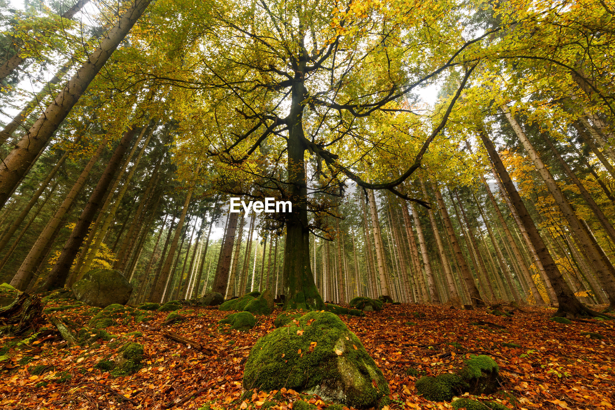 LOW ANGLE VIEW OF TREES AND PLANTS IN FOREST