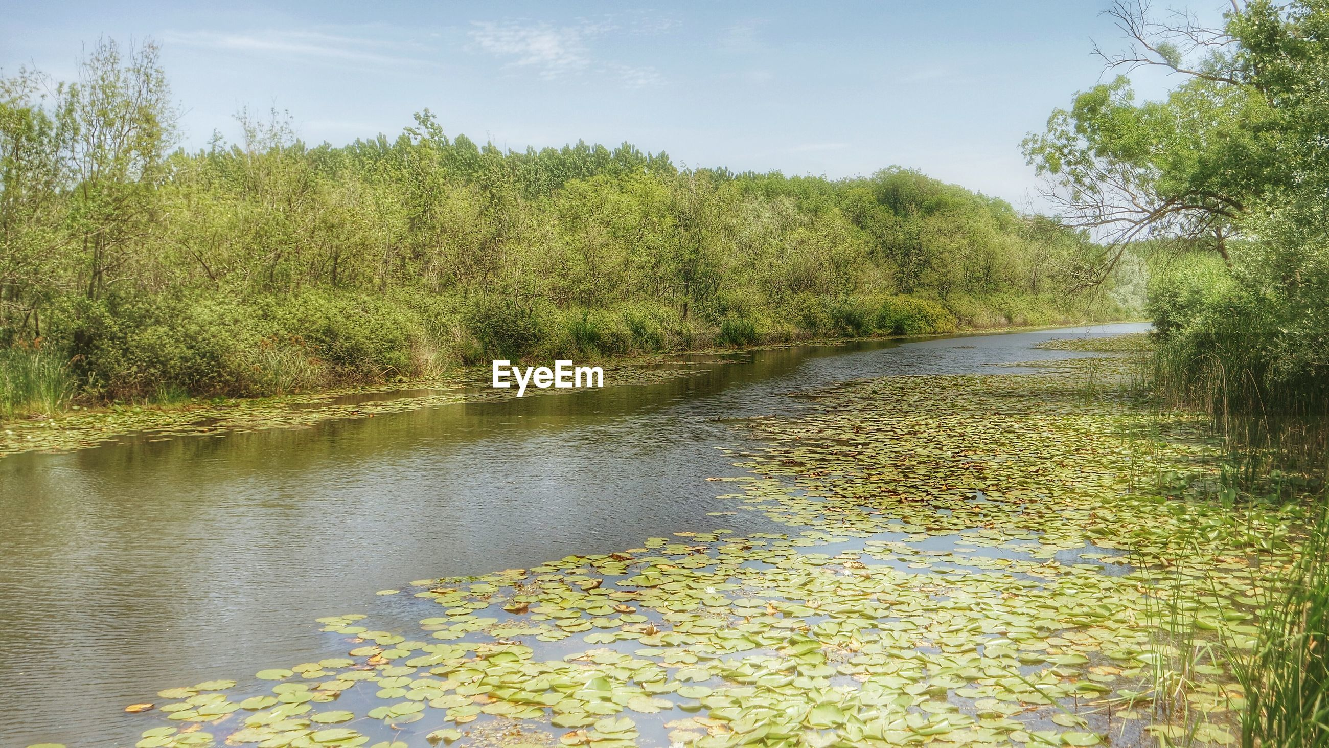 VIEW OF TREES IN POND