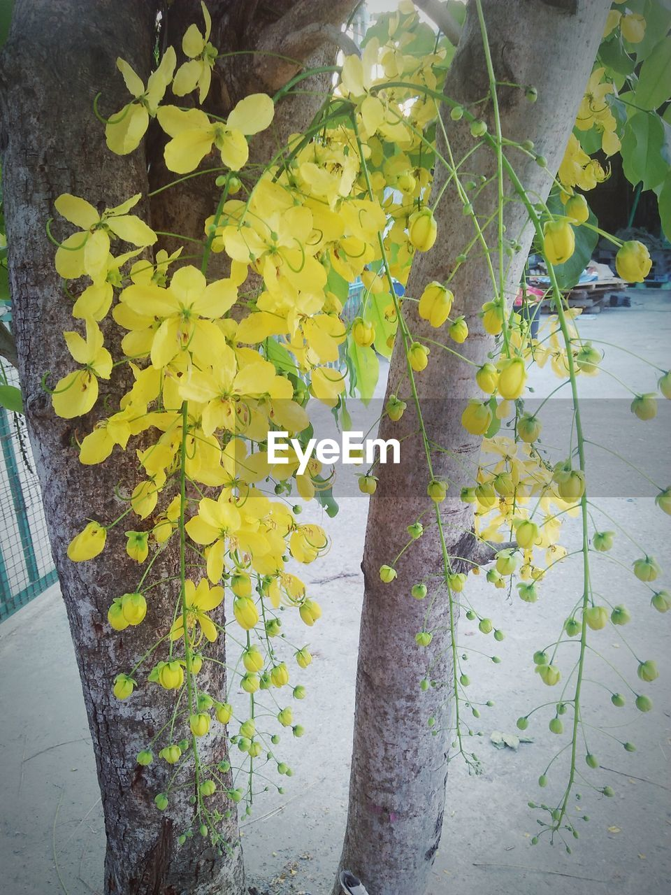 plant, yellow, flower, flowering plant, growth, plant part, leaf, day, beauty in nature, close-up, nature, no people, freshness, fragility, vulnerability, outdoors, tree, tree trunk, autumn, trunk, change, leaves