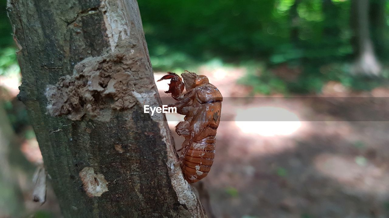 tree, animal, animal themes, focus on foreground, tree trunk, animals in the wild, animal wildlife, trunk, nature, no people, plant, day, close-up, one animal, outdoors, invertebrate, selective focus, insect, vertebrate, mammal