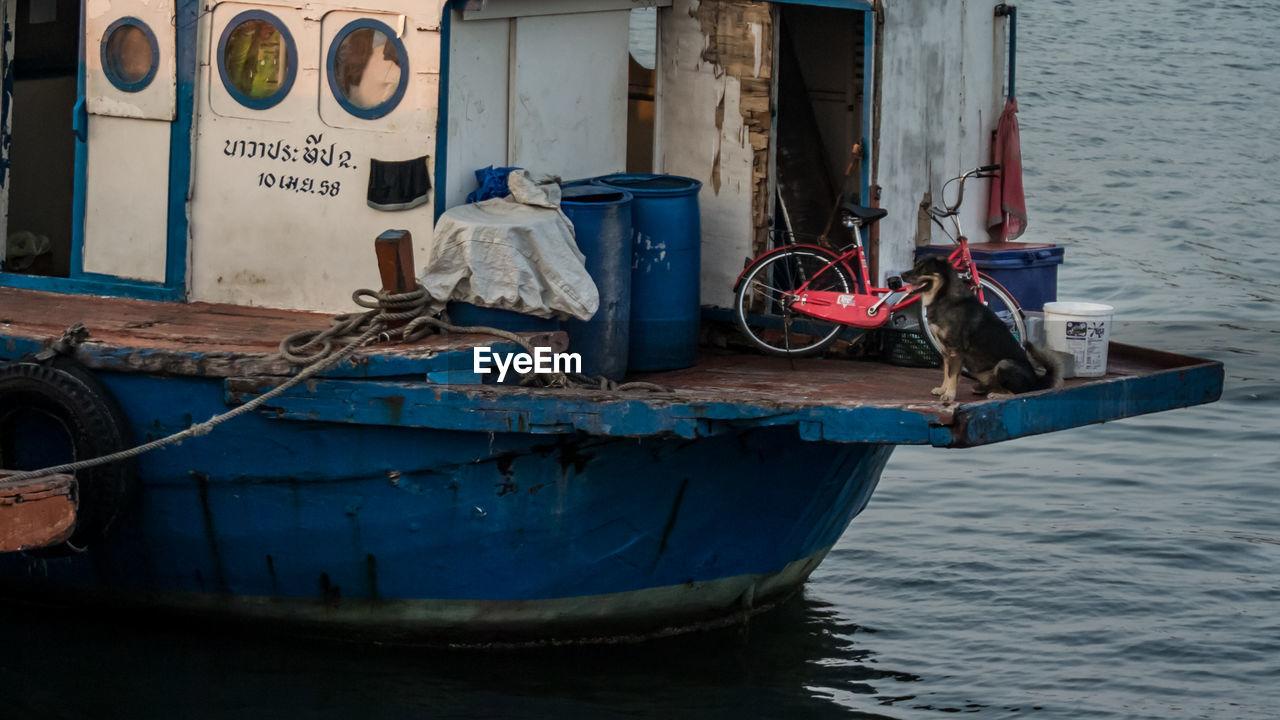 Dog Sitting In Boat
