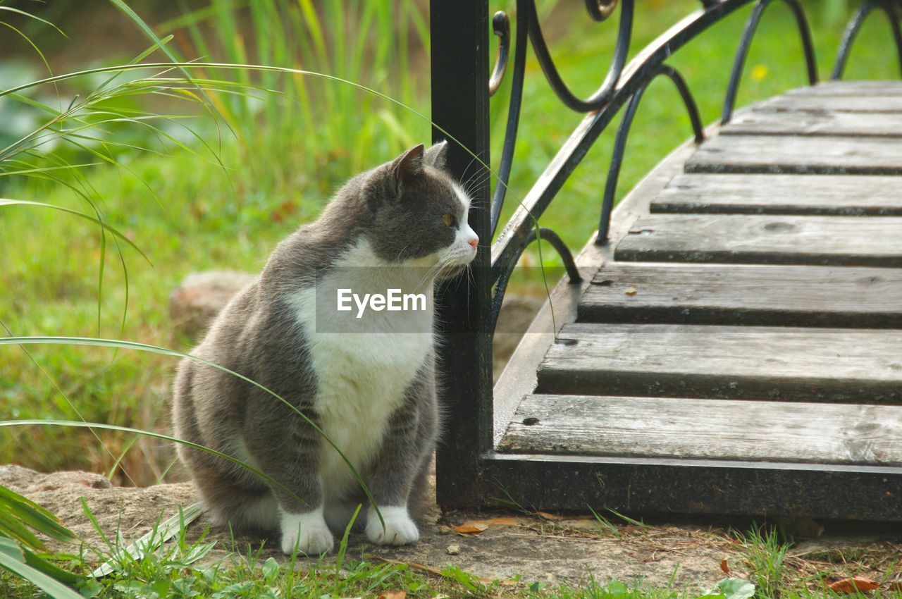 animal themes, one animal, animal, mammal, cat, feline, pets, domestic cat, domestic, domestic animals, vertebrate, no people, grass, plant, looking, sitting, nature, day, staircase, focus on foreground, whisker