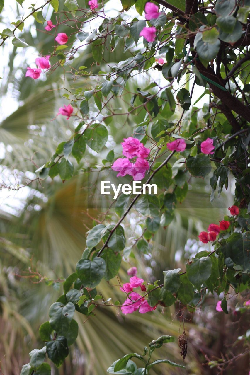 flower, growth, fragility, nature, beauty in nature, tree, pink color, freshness, blossom, branch, petal, day, no people, springtime, outdoors, blooming, close-up, flower head