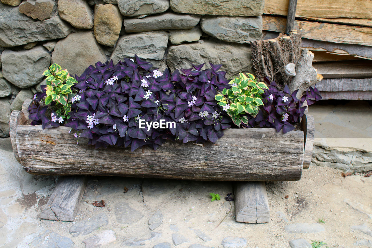 flower, growth, plant, purple, wood - material, no people, outdoors, fragility, day, nature, built structure, beauty in nature, architecture, freshness, window box, building exterior, flower head, close-up