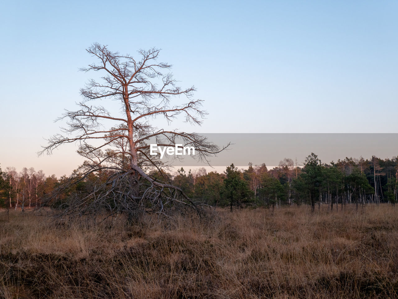 plant, sky, tree, land, field, tranquility, landscape, tranquil scene, beauty in nature, scenics - nature, environment, nature, clear sky, non-urban scene, no people, growth, grass, day, remote, outdoors