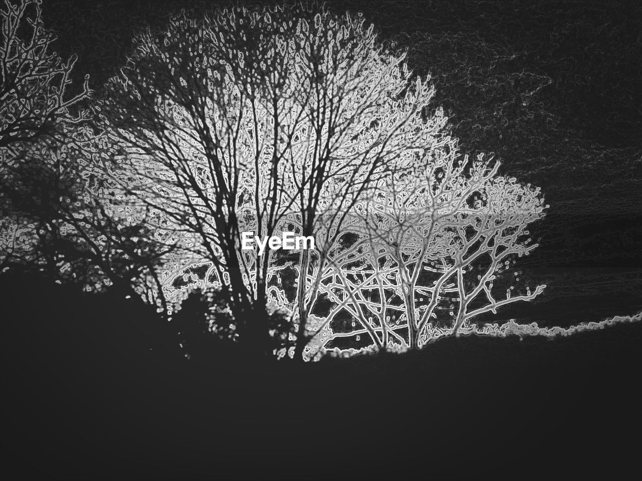 tree, branch, nature, beauty in nature, bare tree, tranquility, outdoors, night, no people, silhouette, landscape, lone