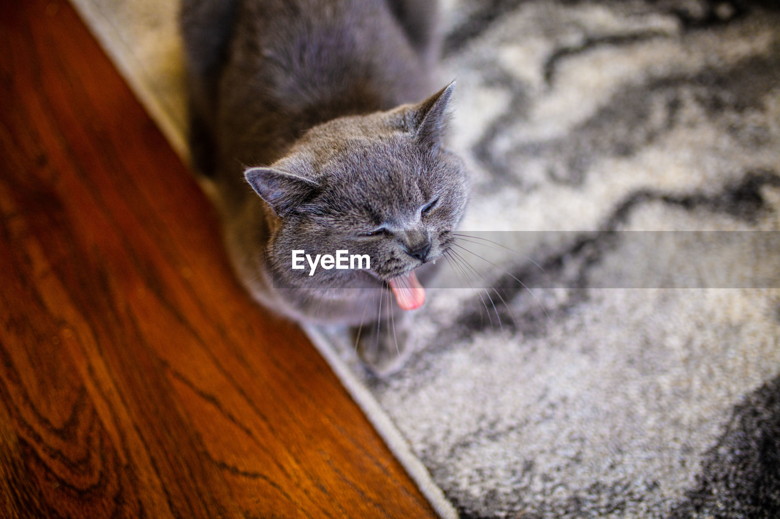 HIGH ANGLE VIEW OF A CAT RESTING ON FLOOR