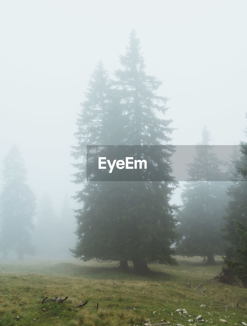 tree, nature, tranquility, landscape, fog, beauty in nature, tranquil scene, day, mist, growth, no people, hazy, outdoors, forest, scenics, winter, grass, cold temperature, sky