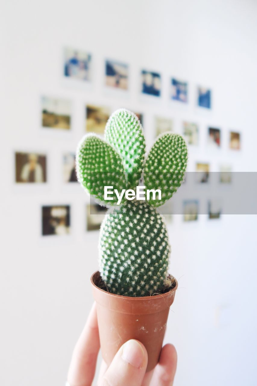 Cropped Image Of Hand Holding Small Potted Cactus