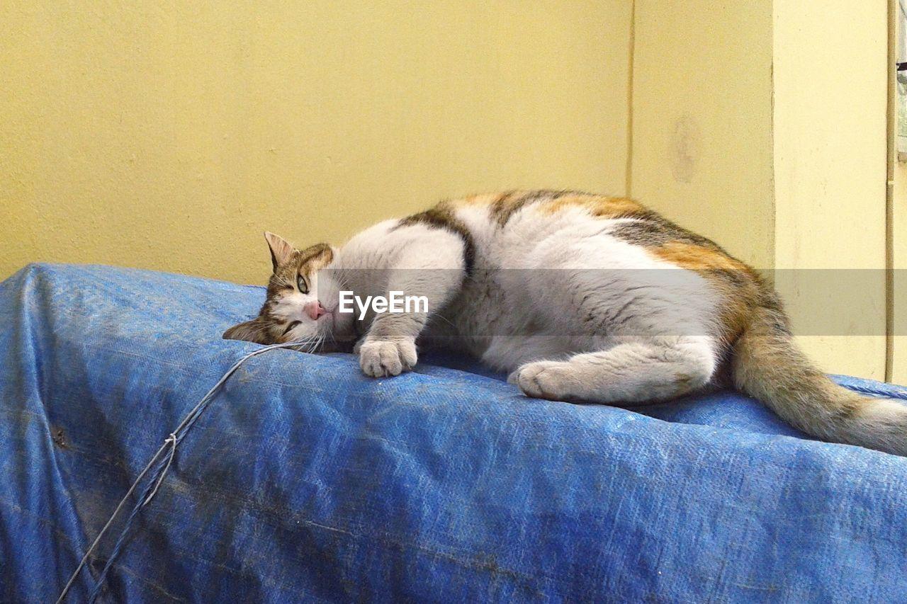 Cat relaxing on tarpaulin