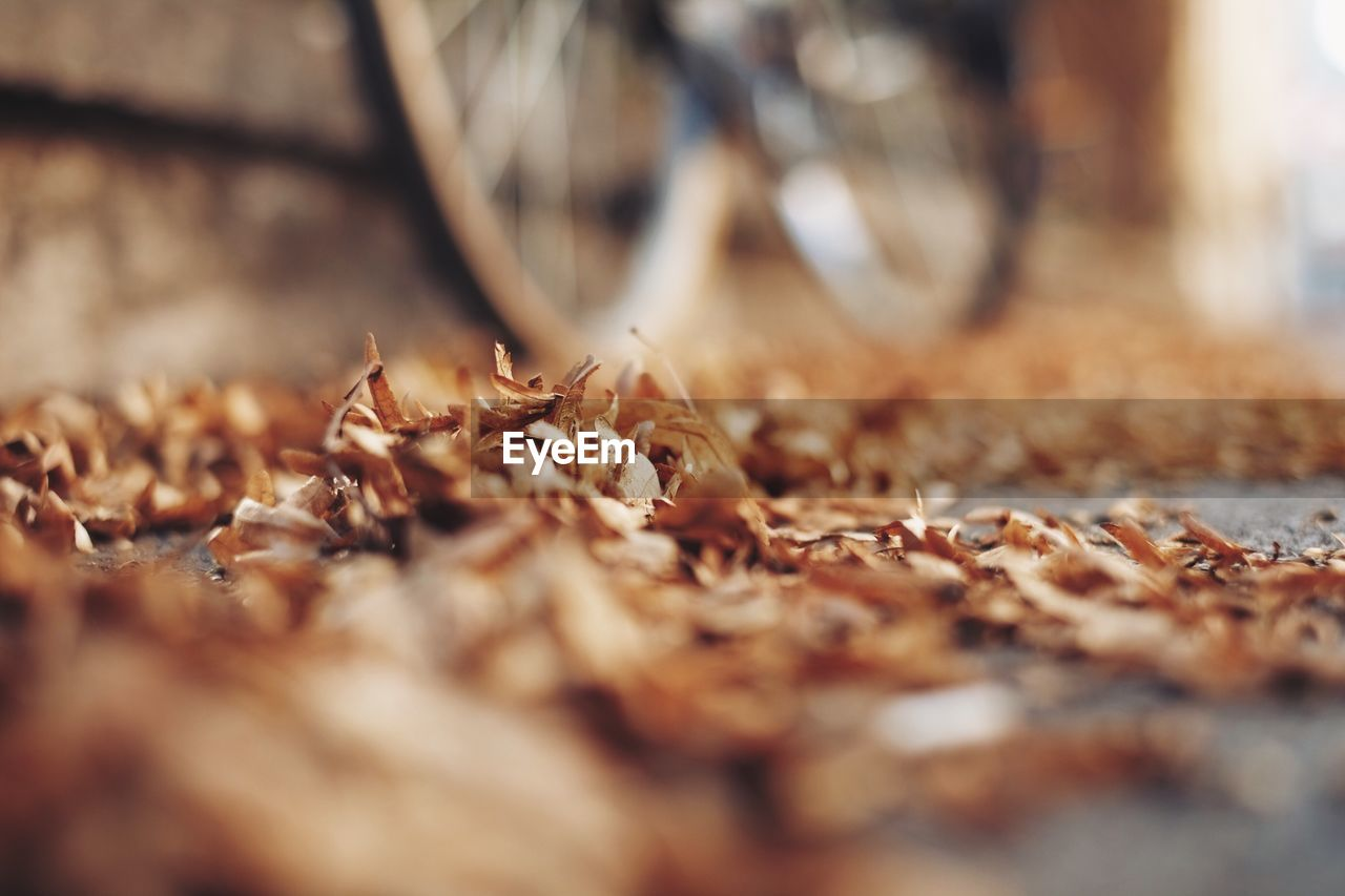 autumn, selective focus, leaf, dry, change, no people, close-up, day, nature, outdoors, fragility