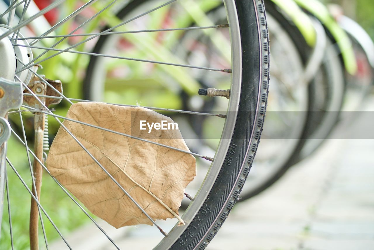 Close-Up Of Dry Leaf On Bicycle Spokes