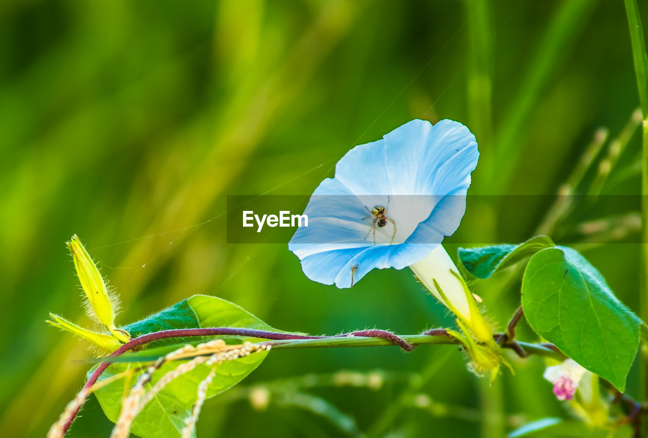 plant, flower, flowering plant, growth, beauty in nature, fragility, vulnerability, close-up, freshness, petal, flower head, inflorescence, blue, green color, plant part, no people, leaf, nature, day, focus on foreground