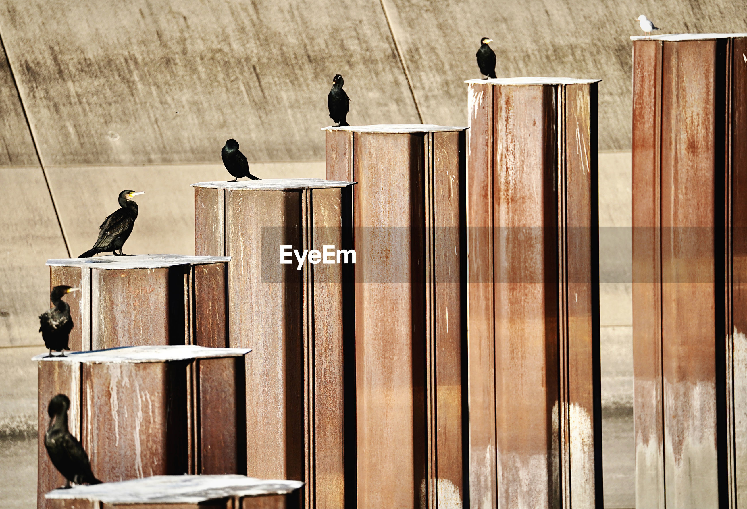 BIRDS PERCHING ON WOOD