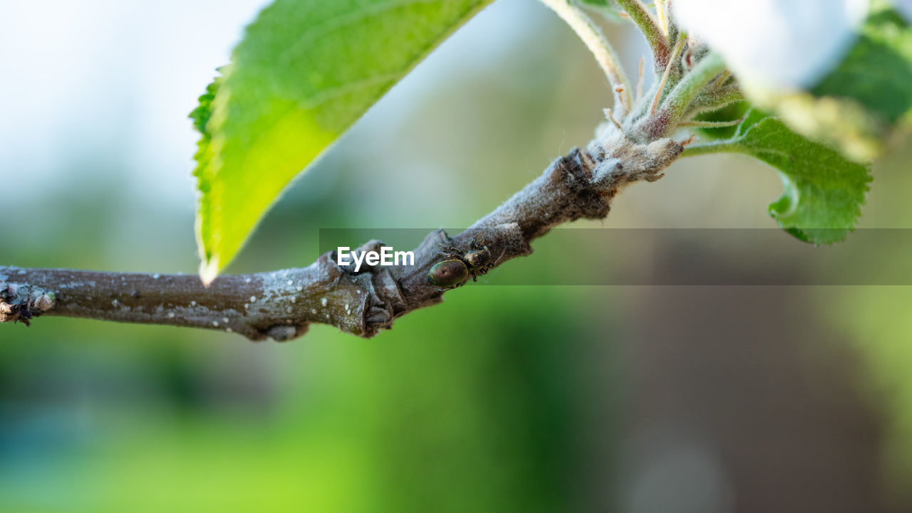plant, focus on foreground, growth, close-up, plant part, leaf, green color, nature, no people, beauty in nature, day, tree, selective focus, outdoors, branch, fragility, tranquility, freshness, vulnerability, beginnings