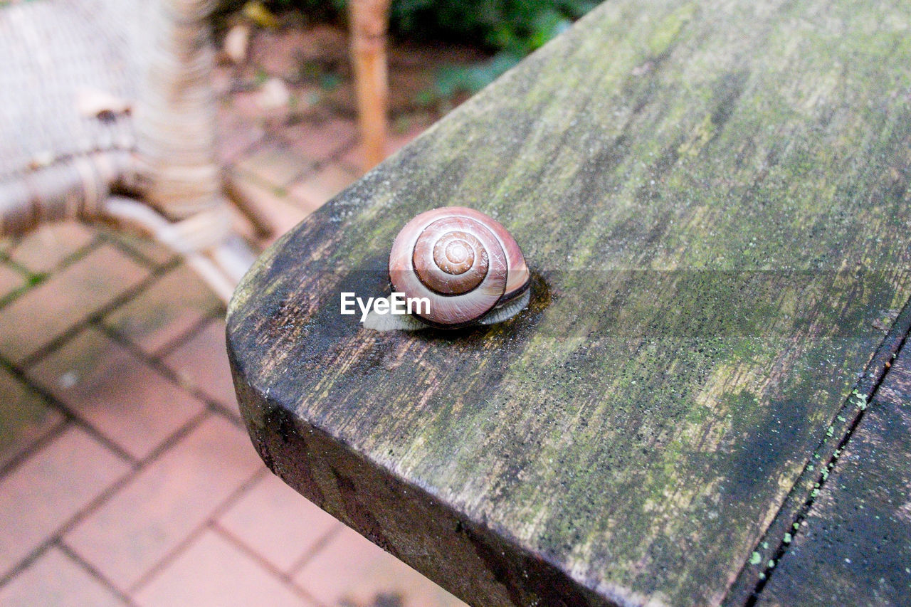 animal wildlife, mollusk, animal themes, animal, gastropod, shell, snail, animals in the wild, invertebrate, one animal, animal shell, wood - material, close-up, day, no people, focus on foreground, boredom, outdoors, high angle view, nature, wood, small, crawling
