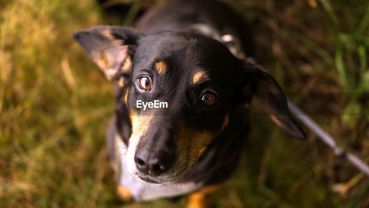 canine, dog, one animal, pets, domestic animals, mammal, domestic, animal, animal themes, black color, vertebrate, looking, day, no people, looking away, close-up, nature, portrait, focus on foreground, animal head, animal eye, snout