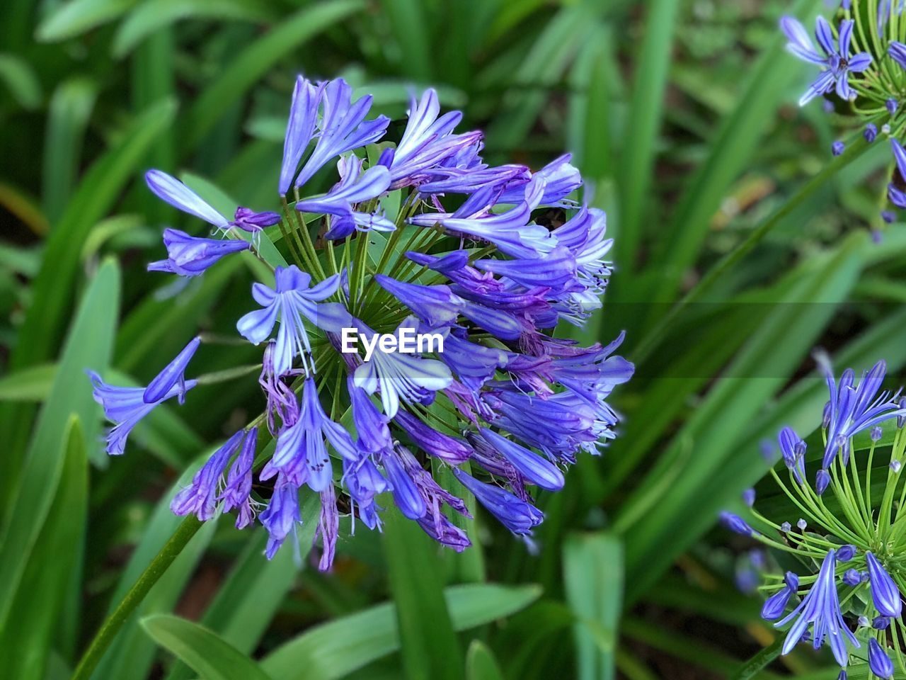 flower, purple, beauty in nature, nature, growth, fragility, petal, blue, plant, freshness, outdoors, day, no people, blooming, flower head, hyacinth, close-up