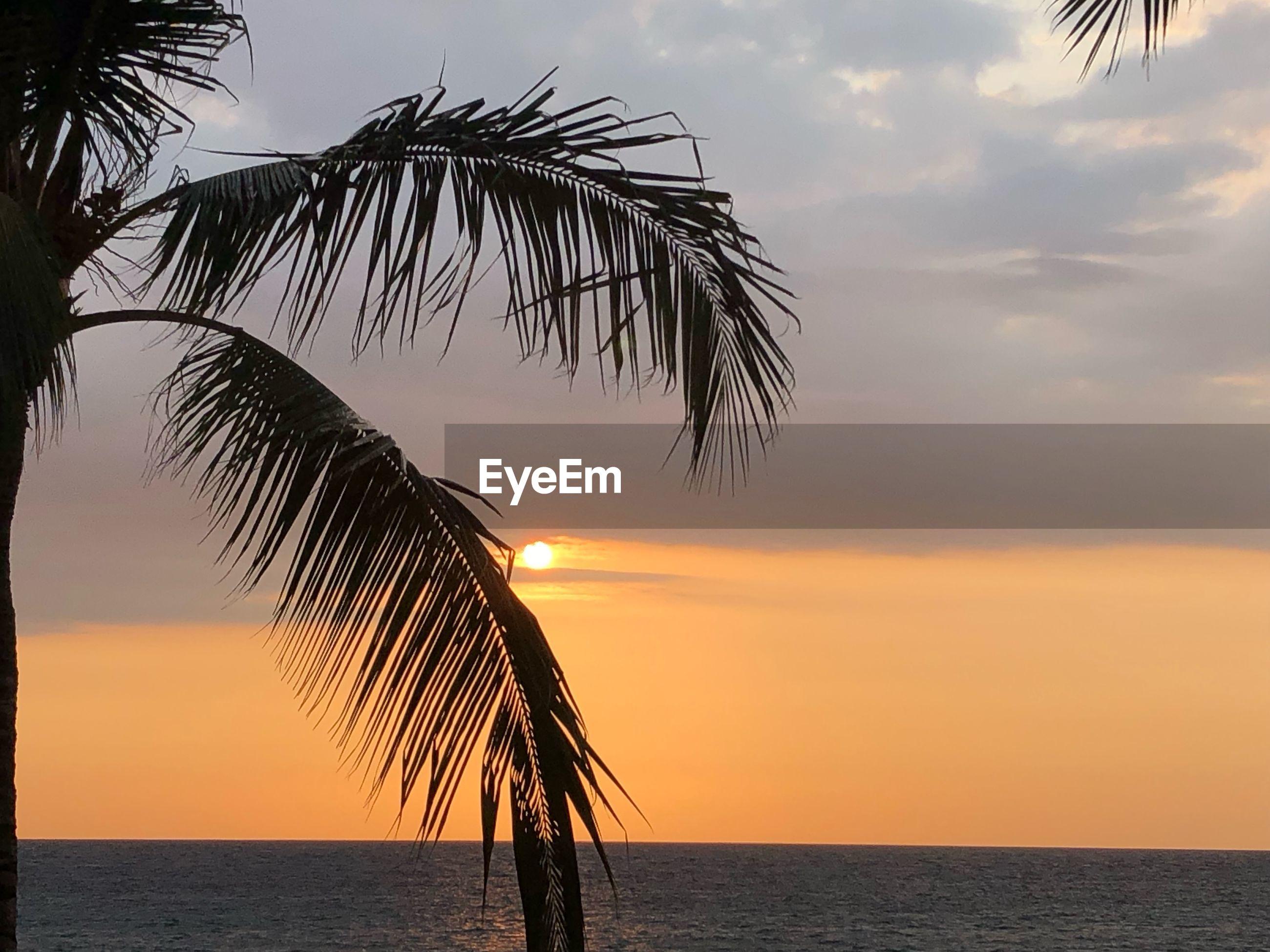 SILHOUETTE PALM TREE BY SEA AGAINST ORANGE SKY